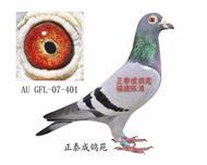 幻影直子AU07―GFL―401