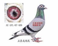 幻影直子AU07―GFL―409