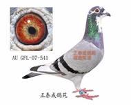 幻影直女AU07―GFL―541