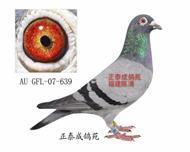 幻影直女AU07―GFL―639