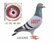 金马顿斯直子AU06―GFL404