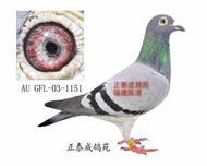 金马顿斯直女AU03―GFL1151