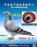 CHN14-13-180037