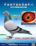 2014年温州振宇公棚决赛84名获奖鸽欣