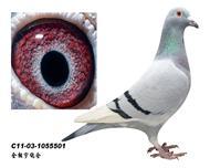 帕斯538直系鸽王冠军