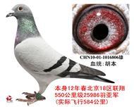 北京18�^�B翔25986羽���