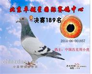 北京卓越星决赛189名(已售)