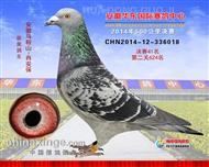 安徽华东国际赛鸽中心
