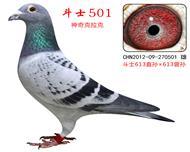 神奇501(斗士613直系)