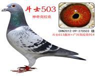神奇503(斗士613直系)