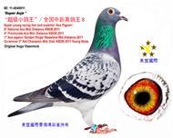 """全国中距离鸽王8位/""""超级小鸽王"""""""