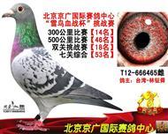 七关鸽王53名