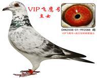 VIP飞鹰直女