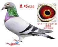 灵巧624(速霸龙)