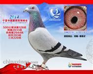 2014宁夏玉翔128名