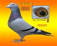 2011年郑州和平公棚决赛225名