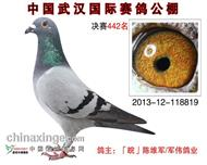 2013年秋武汉国际公棚决赛442名