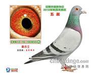 12年安阳市信鸽协会四关鸽王