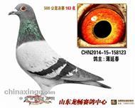 龙卷风123(速霸龙)