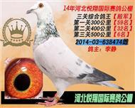 三关综合鸽王(殿军)