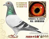 2014年郑州和平公棚决赛171名