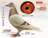 2014年春安徽蚌埠太平公棚决赛189名