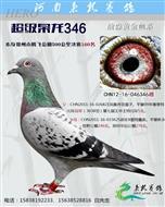 超级枭龙346