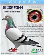 超级枭龙544