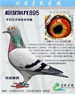 超级枭龙895