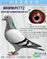 超级枭龙772