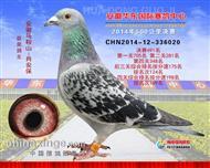华东国际赛鸽公棚决赛491名