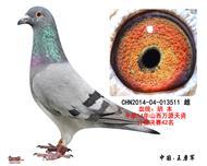 胡本-511