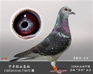 CHN2014-04-776072已售