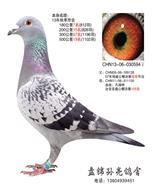 CHN13-06-030594♀