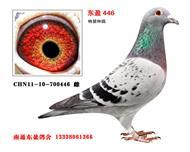 东盈446