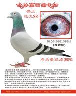 (小迪克88)幼鸽鸽王5位考夫曼家族团队