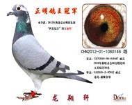 2012年北京正明俱乐部【四关鸽王】冠军