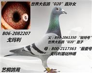 电脑207