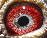巨蟹座眼睛