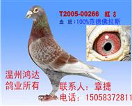 100%纯范德佛拉斯红狐詹森(非卖品)