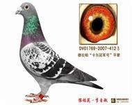 本棚珍藏种鸽