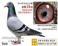 南京五台山公棚14年成绩鸽