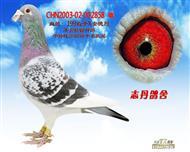 CHN2003-02-002858 雄