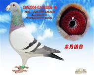 CHN2004-02-002856 雄