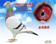 CHN2004-02-002858 雄