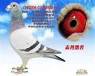 CHN2004-02-168980 雄