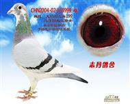 CHN2004-02-168999 雌