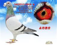 CHN2005-02-338484 雄