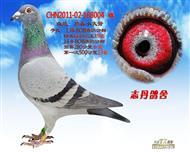 CHN2011-02-168004 雌