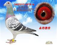 CHN2010-02-168798 雌
